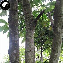 Kaufen Erythrophleum fordii Baumsamen 15pcs Pflanze Hartholz Tali Für chinesische Ge Mu