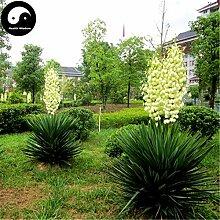 Kaufen Gladiolen Blumensamen 30pcs Pflanze Gladiole Gandavensis Blumengarten