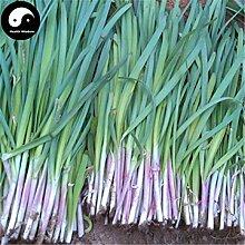 Kaufen Knoblauch-Schnittlauch-Samen 200pcs Pflanze Gewürze Gemüse Lila Wurzel Leek