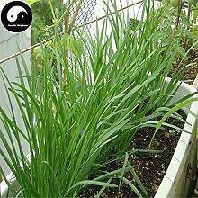 Kaufen Knoblauch-Schnittlauch Samen 400pcs Pflanze Gewürze Gemüse Weiß Wurzel Leek