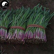 Kaufen Knoblauch-Schnittlauch Samen 800pcs Pflanze Gewürze Gemüse Lila Wurzel Leek