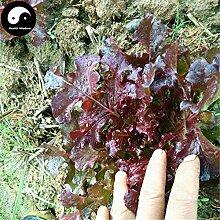 Kaufen Lila Blatt Lactuca Gemüsesamen 300pcs Pflanze Salat Gemüse Sala