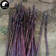 Kaufen Lila Spargel Gemüsesamen 120pcs Pflanze