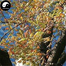 Kaufen Pistache Baum Samen 600pcs Pflanze Pistacia Chinensis Baum für Pistache Baum