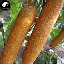 Kaufen Sie Gold Gurke-Samen 100pcs Pflanze Melone Gemüse Cucumis sativus