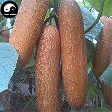 Kaufen Sie Gold Gurke-Samen 200pcs Pflanze Melone Gemüse Cucumis sativus