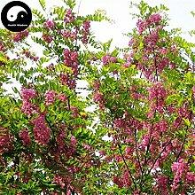 Kaufen Sophora Tonkinensi Baumsamen 60pcs Pflanze Sophora Tonkinensi Guo Huai Shu