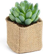 Kave Home - Pachyphytum Kunstpflanze
