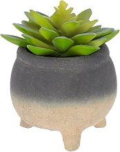 Kave Home - Sedum lucidum Kunstpflanze im beton
