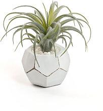 Kave Home - Tillandsia kunstpflanze