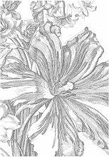 KEK Amsterdam Engraved Flowers II Tapete (4 Bahnen)