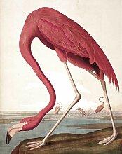 KEK Amsterdam Flamingo Tapetenpaneel (b) 142.5 X