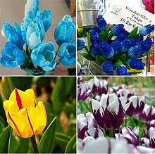 Keland Garten - 100 Stück Selten Tulpen