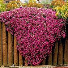 Keland Garten - 100pcs Raritäten rosa Kissen