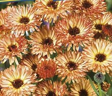 Keland Garten- Bienenwiese Blumenmischung, Premium