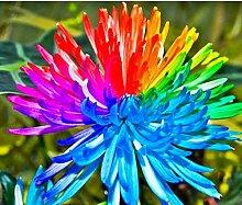 Keland Garten - großblütig Regenbogen