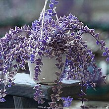 Kemanner Seltene Ivy Blumensamen Garten Topf
