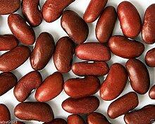 Kidney-Bohnen, LARGE DUNKELROT, 500 Samen,
