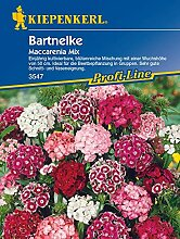 Kiepenkerl 3547 Bartnelke Maccarenia Mix