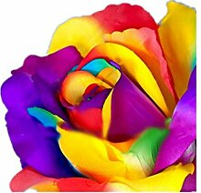 KINGDUO 100 Pcs Colorful Seltene Rose Seeds Garten