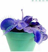 KINGDUO 100 Pcs Garten Topf Blau Insectivorous