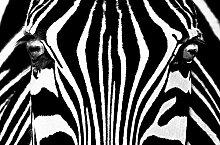 KiSS! Fototapete, Bildtapete, BLACK+WHITE, Giant