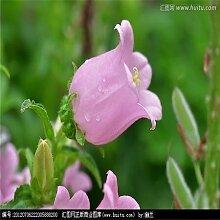 Klar: Bonsai Fingerhut Samen 100 Stücke 10 Arten