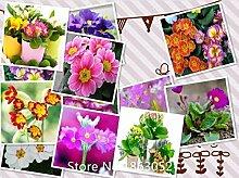 Klar: Garten 200 Samen/Pack, Primula Samen