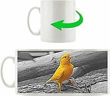 kleiner wachsamer Kanarienvogel schwarz/weiß