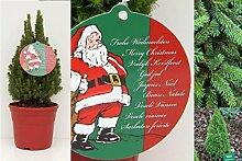 Kleiner Weihnachtsbaum Picea glauca