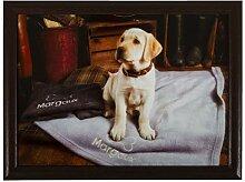 Knietablett mit goldenem Labrador-Welpen, 33 x 44