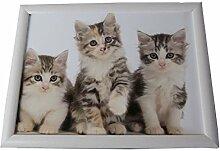 Knietablett weiß mit 3 Kätzchen 43x33x7 cm