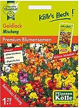 Kölle's Beste Blumensamen Goldlack Mix (Cheiranthus)