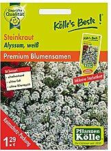 Kölle's Beste Blumensamen Steinkraut (Alyssum), weiß
