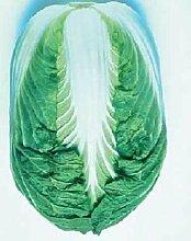 Kohl Chinese Blues Gemüsesamen