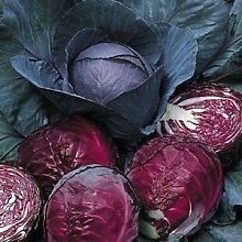 Kohl Red Acre Gemüsesamen (Brassica oleracea) 200