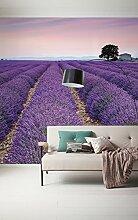 Komar 036-DV3 Vlies Fototapete Provence Tapete,