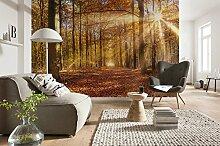 Komar - Fototapete GOLDEN DAWN - 368 x 254 cm -