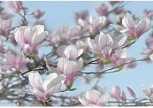 Komar Fototapete Magnolia 368 cm x 254 cm