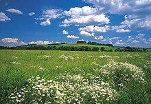Komar Fototapete Meadow