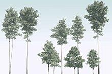 Komar Fototapete Pines, floral-Wald-natürlich