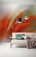 Komar - Vlies Fototapete TAUTROPFEN - 300 x 250 cm