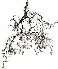 Korkenzieher-Ast Osterdeko: Frühlingsdeko mit Zweigen - Korkenzieheräste groß - echte Äste (ca. 120cm lang; 40cm breit)