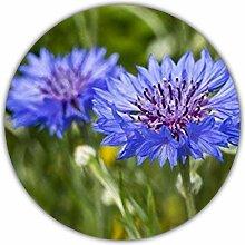 Kornblumen Samen - Ca. 50 Samen - Centaurea cyanus