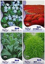 Kräuter Pflanze Diy leicht anzubauen Balkon Blume 4 Arten Blumensamen-DIY Hausgarten-Samen Seltene 6