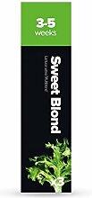 Kräuter-Samenkapseln für Plantui Smart Garden, Gartensalat 3x