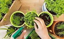 Kräuterpaket - 6 Kräuter (ca. 350 Samen) - Ideal für die Fensterbank