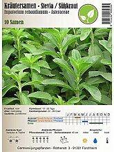 Kräutersamen - Stevia rebaudiana/Süßkraut -