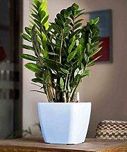 kreative Blume Topf Plastikblumentopf Kreative Persönlichkeit Indoor Automatische Bewässerungs-Aufbewahrungs-Töpfe Eingemachte Tischplatten-Blumen-Pflanzer-Blau ( farbe : A , größe : 18*18*16.5cm )