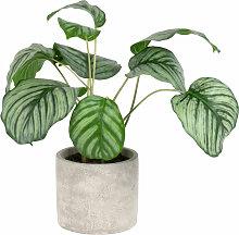 Künstliche Calathea-Pflanze